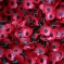 Greg urges constituents to support Poppy Appeal electronically